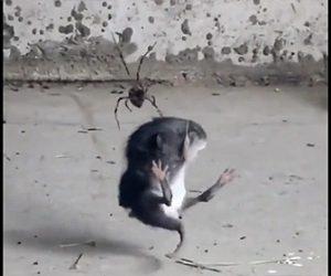 【動物】クモVSネズミ クモの巣に引っかかり身動きが取れないネズミ