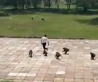 【動物】コートでサッカーをしている人達にヒヒの群れが襲いかかってくる衝撃映像