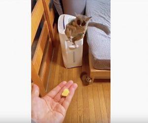 【動物】手のひらの餌にマウスキツネザルが飛びついてくる衝撃映像