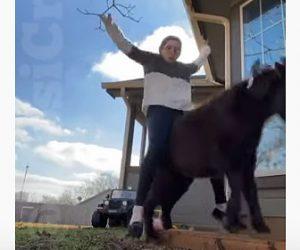 【動物】女性がポニーに乗ろうとするが落下。背中を強打する衝撃映像