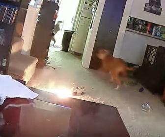【動物】犬がバッテリーに穴をあけバッテリーが爆発。床が燃えてしまう衝撃映像