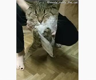 【動物】女性が冷蔵庫を開けた瞬間、ペットの猫が冷蔵庫に飛び込みポテトを盗む面白映像