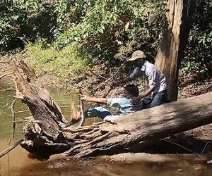 【動物】男性2人で巨大なコブラを捕まえようとするが足が滑り…