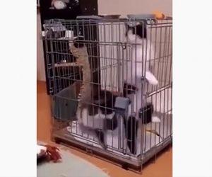 【動物】小さなゲージに入ったネコ2匹が猛スピードでグルグル回る衝撃映像