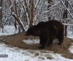【動物】20年間狭い檻で飼われていたクマが檻から出されるが…