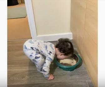 【面白】赤ちゃんがボウルに入った犬の水を飲もうとするが…