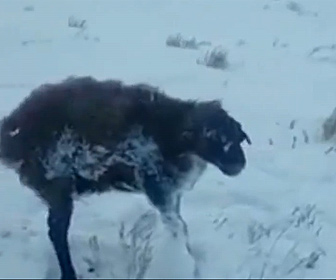 【衝撃】カザフスタンで気温がマイナス51℃になり野生動物が立ったまま凍ってしまう衝撃映像