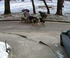 【衝撃】女子高生が野良犬の群れに追いかけられ必死に逃げる衝撃映像