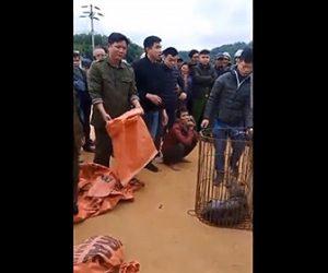 【泥棒】犬や猫を数百匹盗みレストランに売り飛ばしていた泥棒が捕まる