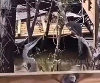 【動物】サギ(鳥)が木に止まっているリスを食べてしまう衝撃映像