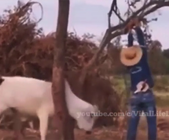 【動物】木に挟まり動けない牛を男性2人が必死に助けるが…