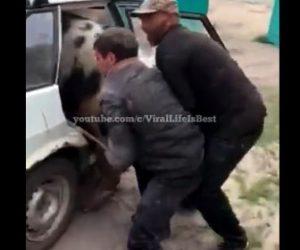 【動物】乗用車の後部座席にブタを押し込み運ぼうとする衝撃映像