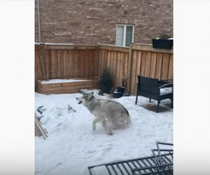 【動物】雪が降り大はしゃぎする犬が可愛い