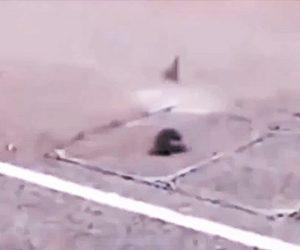 【動物】蝶々を追いかけるネズミが車に轢かれてしまう衝撃映像
