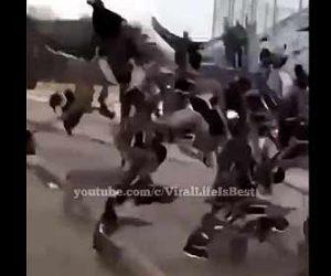【動物】餌を食べるカモの群れにボブキャットが襲いかかる衝撃映像