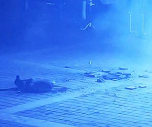 【爆発】少年がマンホールに火がついた爆竹を投げ込み大爆発。マンホールの蓋が少年に直撃する衝撃映像