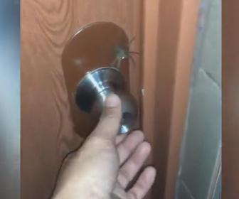【衝撃】トイレから出ようとするがドアノブの上に巨大なクモが…