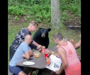 【動物】野生のツキノワグマがピクニックに参加する衝撃映像