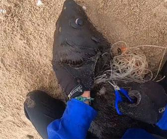 【動物】釣り糸が首に絡まったアザラシの子供を助けてあげる