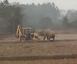 【動物】ゾウVS重機 ホイールローダーにゾウが突っ込んでいく衝撃映像