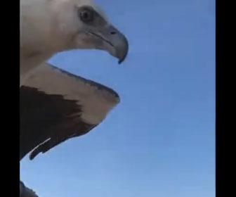 【動物】男性から飛び立った鷹が魚を捕まえて戻ってくる