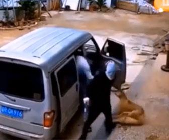 【泥棒】犬泥棒が鎖を切り、3匹の犬をバンに引きづり込み盗んでいく衝撃映像