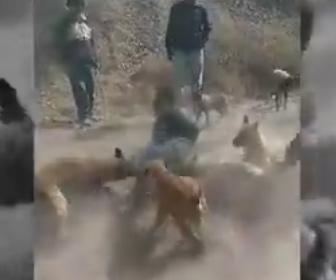 【衝撃】馬泥棒が捕まり体を縛られ犬の群れに噛まれまくる衝撃映像