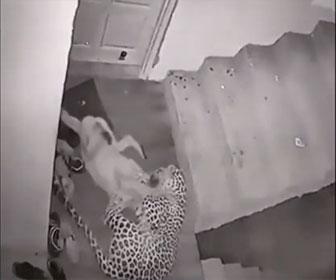 【動物】寝ているラブラドールレトリバーにヒョウが襲いかかる衝撃映像