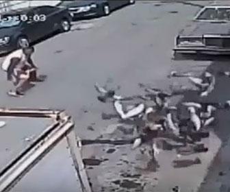【衝撃】餌を投げてハトを集め網を投げて大量のハトを捕まえる衝撃映像