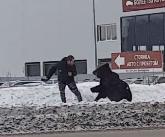 【動物】道で電話中の男性に巨大なクマが飛びかかってくる衝撃映像