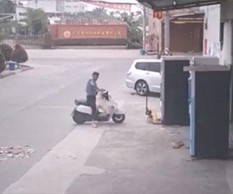 【泥棒】犬泥棒が犬を麻痺させバイクに乗せて逃走する衝撃映像