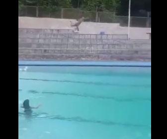 【衝撃】少年が女の子にいいところを見せようと大ジャンプをしてプールに飛び込むが…