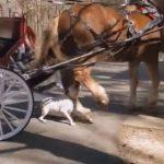【動物】馬車馬にピットブルが襲いかかるが…衝撃映像