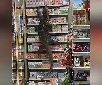 【動物】オオトカゲが店に侵入し商品棚を登る衝撃映像