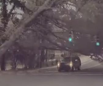 【衝撃】道を走る車に巨大な街路樹が倒れてくる衝撃映像