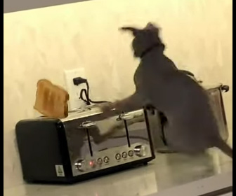 【動物】焼けたパンがトースターから飛び出し横にいたネコが…
