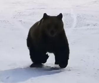 【動物】スキーヤーを猛スピードで追いかけてくるクマが怖すぎる