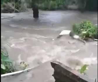 【衝撃】川で流されてしまった犬を助けるため、濁流に飛び込む勇敢な男性が凄い