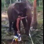 【動物】観光客が象に近づき鼻を触ろうとするが…
