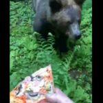 【動物】猛スピードで追いかけてくるクマにピザをあげる衝撃映像