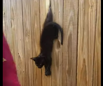 【動物】柵板に足が挟まってしまった子猫を助け出す