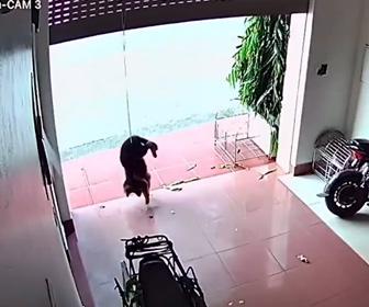 【動物】ガレージシャッターに繋がれた犬。シャッターが上がり宙ずりに…