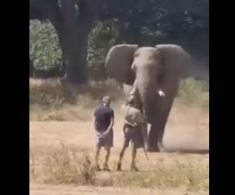 【動物】ゾウが男性2人に猛突進するが…