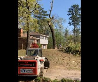 【動画】巨大な木を重機で引っ張り倒そうとするが倒れた角度が…