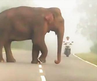 【動物】車道を走るバイクの前に巨大なゾウが…