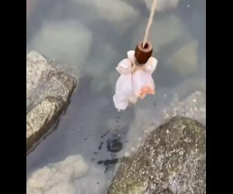【衝撃】チキンを海に沈めて大量のカニを釣り上げる衝撃映像