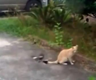 【動物】鳥が後ろを向いてるネコに何度も飛びかかるが…