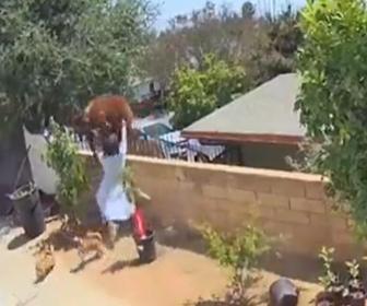 【動物】裏庭に侵入しペットの犬に襲いかかるクマに17歳の少女が飛びかかる衝撃映像