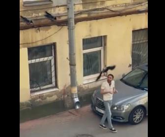【動物】車の上にいるカラスを男性が捕まえて退かそうとすると、近くにいた3羽のカラスが飛びかかってくる
