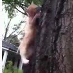 【動物】木に登るリスに猫が飛びかかってしまう